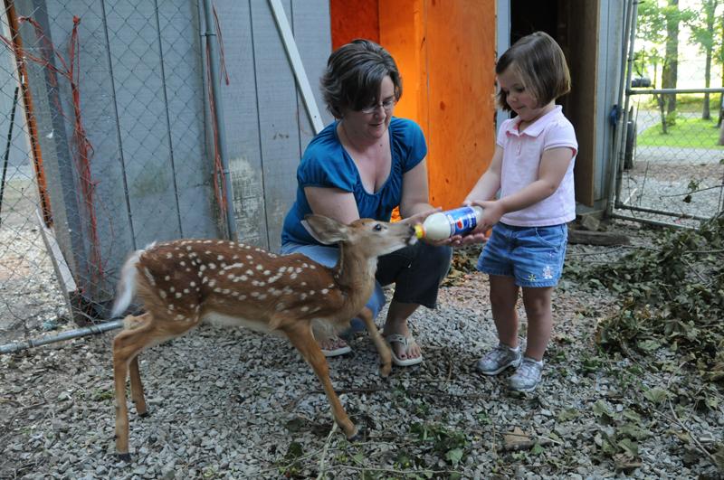 Deer_meande-3