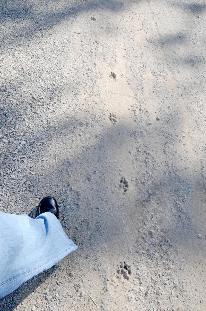4-footprints_7137