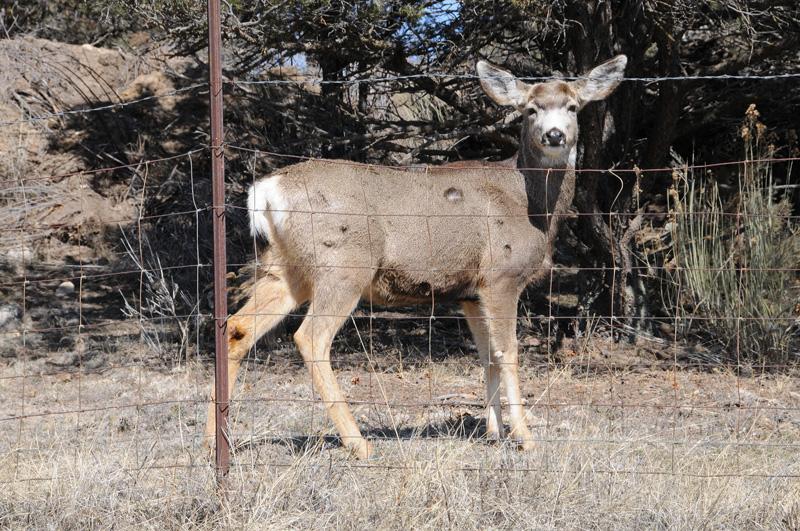 1-deer_7160