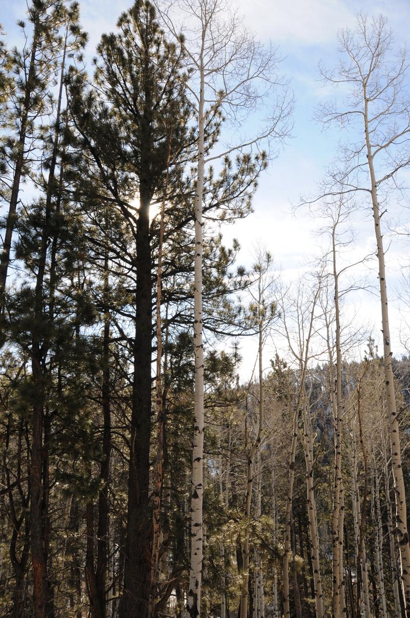 6-pretty-trees_7124